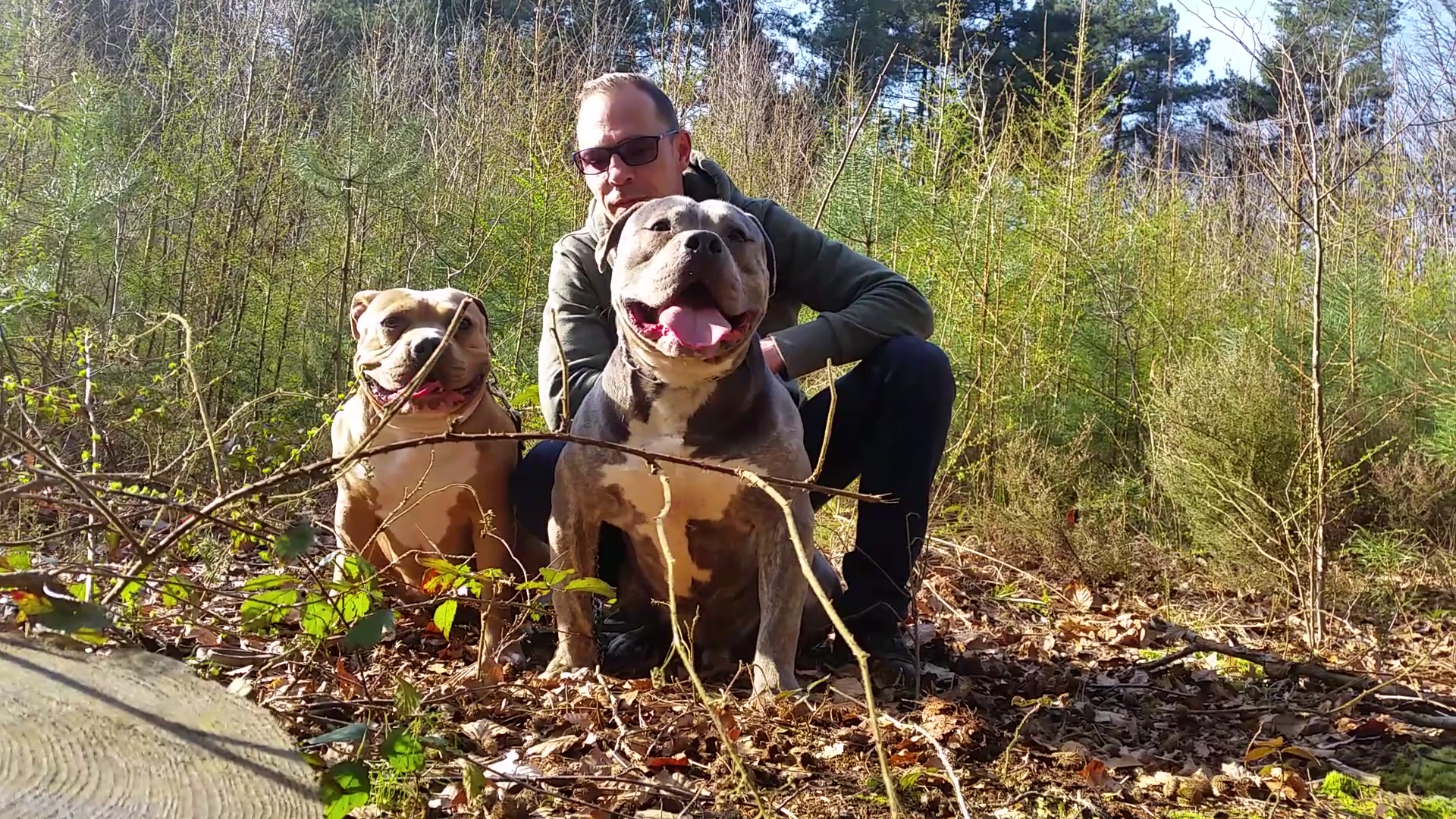 The Falcon American Bully Kennel Lionheart Bloodline